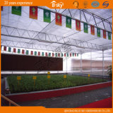 China Supplier Polycarbonate Sheet Green House para Planting Vegetables