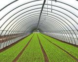 단 하나 경간 또는 Multie 경간 플레스틱 필름 농업 온실 또는 야채 & 과일 온실