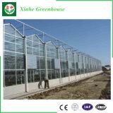 야채를 위한 다중 경간 상업적인 유리제 온실