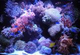 51cm 20W de Super LEIDENE van de Macht van de Helderheid Hoge Lichten van het Aquarium voor de Tank van de Ertsader van Vissen