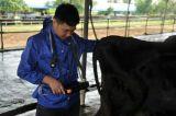 Ultrason de vache avec l'image claire