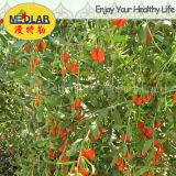 Ningxia secco nespola Wolfberry organico
