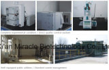 Canfora maleica di /Systentic dell'anidride del rifornimento diretto standard della fabbrica di GMP