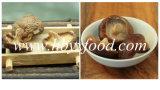 栄養価が高い肉によって乾燥されるスムーズな椎茸きのこ