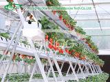 판매를 위한 향상된 hydroponic 양상추 Growing System