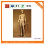 Torso 08043 van de Mannequin van de Ledenpop van de Mens van de glasvezel