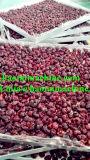 Lyophilizer da fruta com certificado do Ce