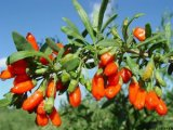 Rifornimento della frutta secca di HACCP Goji
