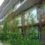 Maille flexible de corde d'acier inoxydable pour la garantie de jardin