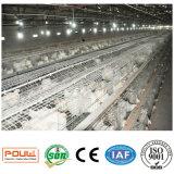 Поставщик Китая клетки цыпленка бройлера высокого качества