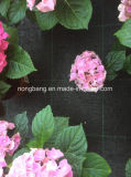 養樹園のための120GSM黒いPP Weedのマット