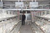 판매 (유형)를 위한 좋은 품질 & 가격을%s 가진 보일러 닭 감금소