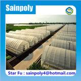 Serre chaude simple de tunnel d'envergure de constructeur de la Chine pour le poivre