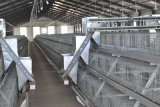 Henan Poultech에서 어린 암탉의 닭 감금소