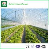 Invernadero de la película plástica del jardín vegetal de la flor
