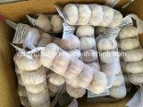 Alho branco normal 5p/200g da colheita nova