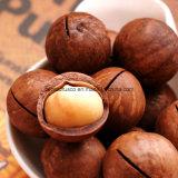 Macchina d'acciaio di apertura della noce di noce di macadamia di Stailess con il migliore prezzo