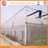 딸기 로즈를 위한 농업 또는 상업적인 폴리에틸렌 필름 갱도 녹색 집
