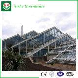 로즈 감자를 위한 정원 또는 농장 또는 갱도 다중 경간 유리제 녹색 집