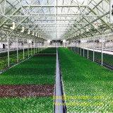 Grands 10 mètres de Multi-Envergure de film de serre chaude de serre chaude de légumes