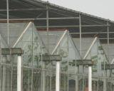 Invernadero hermoso y práctico del vidrio de Venlo