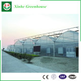 Invernadero multi de la película del palmo Po/PE de China para plantar
