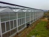 Estufa da folha do policarbonato de Venlo da Multi-Extensão da agricultura do fornecedor da fábrica para a venda