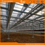 Casa verde de vidro da Multi-Extensão da alta qualidade com o telhado F-Limpo da película