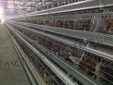 Cage galvanisée de Chiken de bonne qualité avec l'OIN de certificat, GV