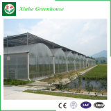 Landwirtschafts-Bauernhof Multi-Überspannung Plastikfilm-Gewächshaus für Gemüse