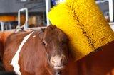 Vache à rouleau-masseur de bétail rayant le balai