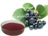 Schwarzes Chokeberry-Auszug-Polyphenol 10%-30%; Anthocyanidin 1% ~ 25%