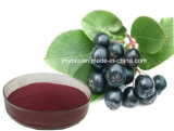 Fabrik-direktes Zubehör-Schwarzeschokeberry-Auszug-Polyphenol 10%-30%; Anthocyanidin 1% ~ 25%