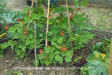 Compensation de fil de volaille de frontière de sécurité de jardin de Sailin