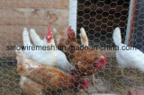 Гальванизированное шестиугольное плетение провода цыпленка/кролика/цыплятины