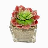 De kunstmatige Combinatie van Succulents van de Installatie met Natuurlijke Aanraking als Ornamenten