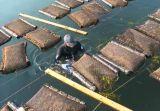 Maglia che apre i sacchetti della gabbia dell'ostrica della rete di acquicoltura di 9*9mm