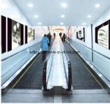 Elevatore della camminata mobile di Fujizy