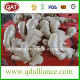 Frischer oder Luft-trockener organischer Ingwer mit EU-Standard