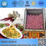 Commercio all'ingrosso fresco dell'aglio in Cina con il buon prezzo dell'aglio