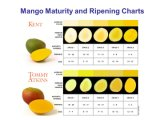 망고 바나나 과일을%s 에틸렌 Ripener