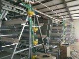 Cages chaudes de couche de poulet de ferme avicole de vente avec le prix bas