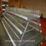 Matériel automatique de volaille/matériel Chambre de poulet/matériel automatique pour des éleveurs, poulets à rôtir
