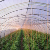 Invernadero comercial barato de la agricultura de la venta del proyecto caliente del invernadero para el área fría