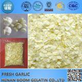 Цена Garlics снежка белое с высоким качеством