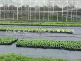 أسود [بّ] و [ب] [ويد] حصير يجعل في الصين