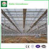 Multi estufa do policarbonato da extensão para a planta da agricultura