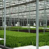 농업 온실을%s 강한 상업적인 수경법 온실