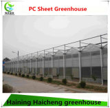 PC Sheet Multi Span Glass Green House for Flowers