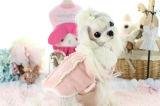Couche d'animal familier de rose de velours de vêtement de crabot de l'hiver de modèle belle